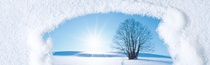 Images used in the refrigerant F-gas campaign, looking trough frozen window at a tree sunrise.